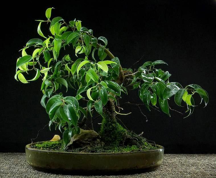 bonsai mech