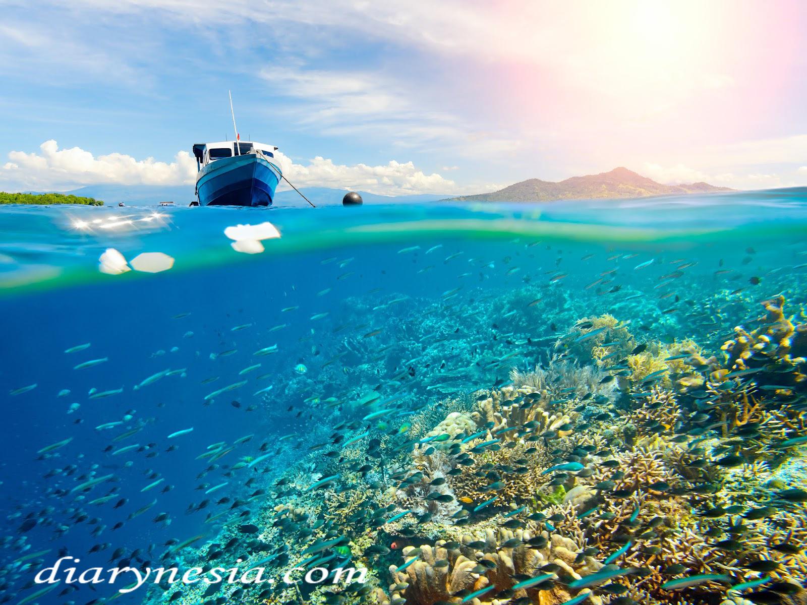 Bunaken tourism, Trip to bunaken, Diving in manado and bunaken, diarynesia