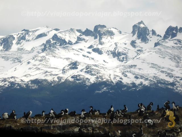 P.N: Ushuaia - Pinguinos antárticos (Argentina)