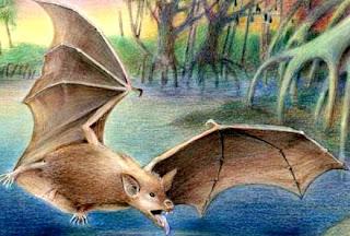 Ilustración de un murciélago volando