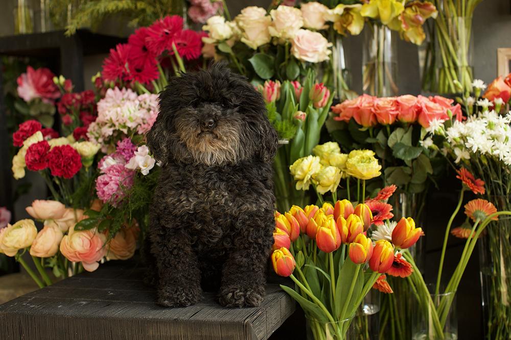 fiori e fitoterapia