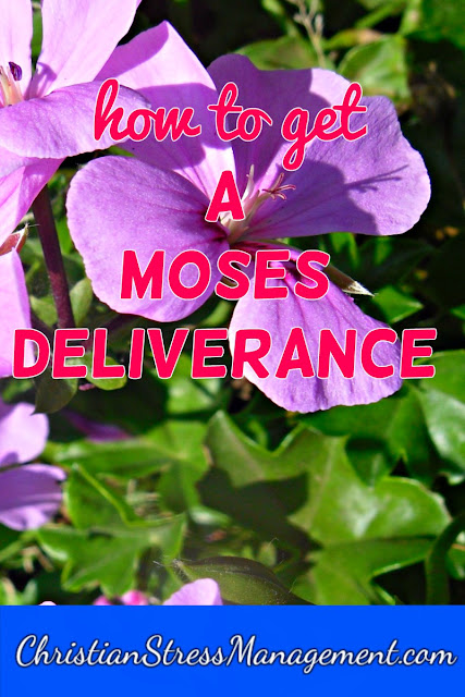 How to get a Moses Deliverance