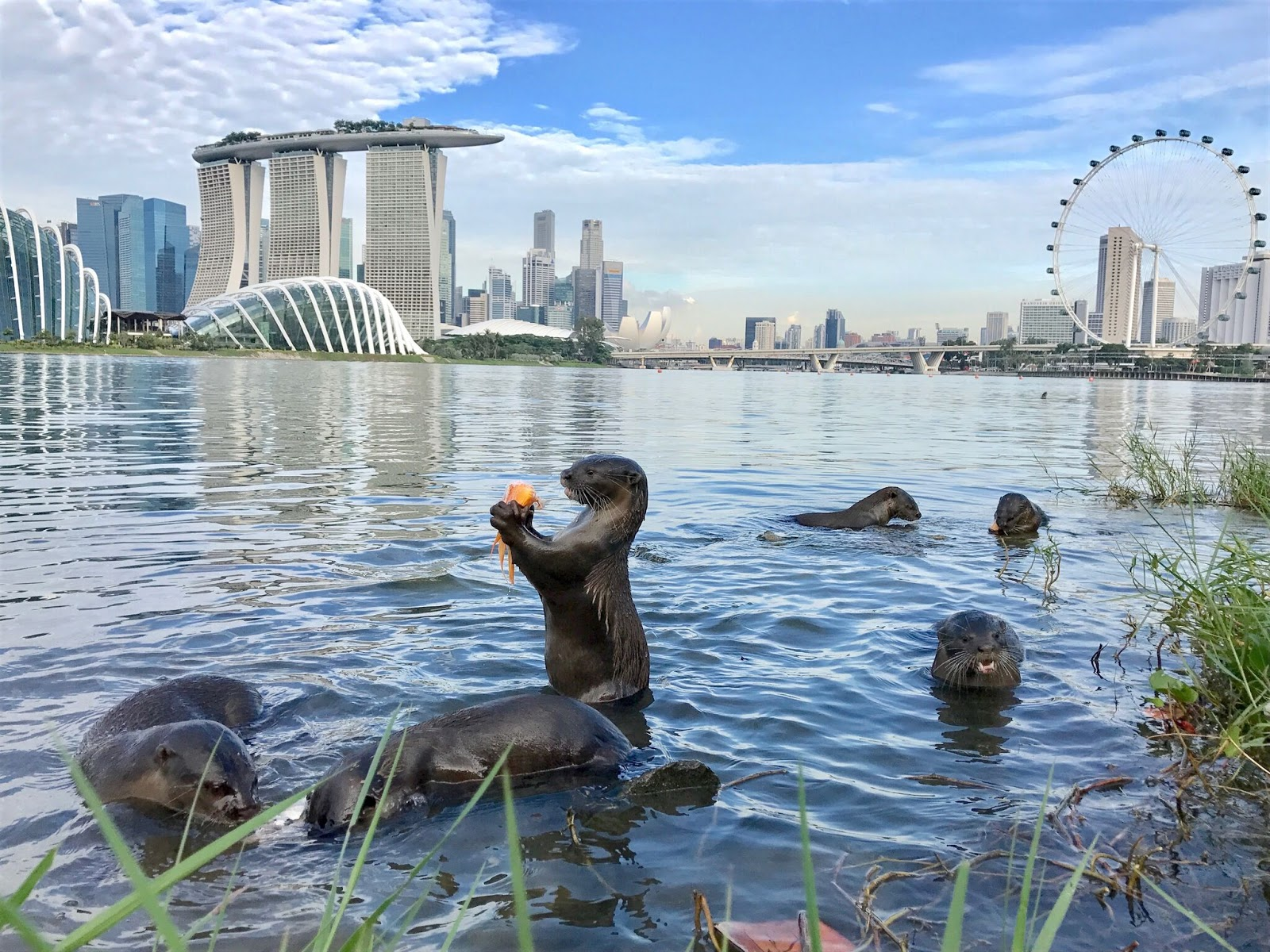 Ms Emily Khor, 33, an administrative staff member, felt it would be a nice change to see the otters representing Singapore.