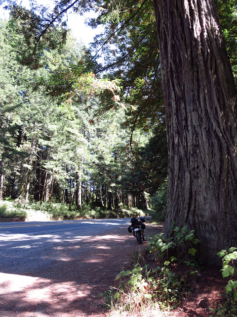 Redwood Highway California