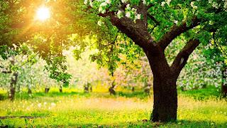 Ανοιξιάτικο τοπίο με ανθισμένα δέντρα.