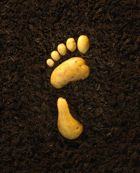 Poster quảng cáo thực phẩm