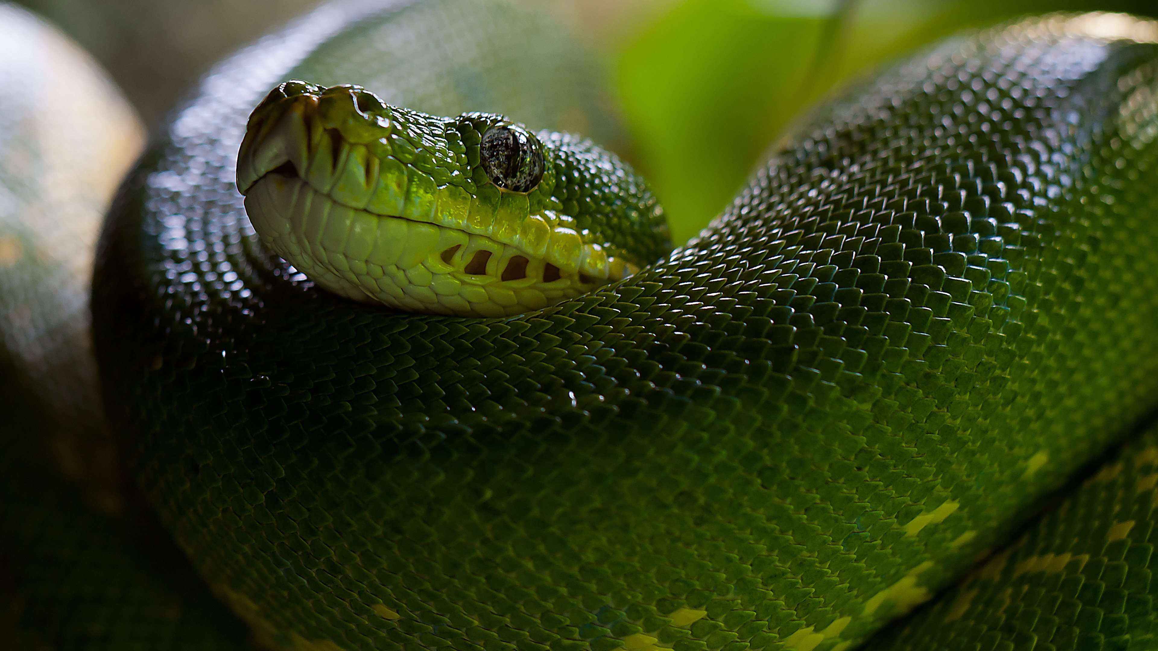 tree snake hd wallpapers (30 wallpapers) – hd wallpapers