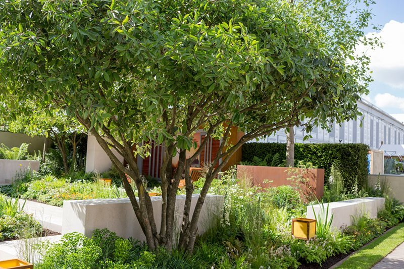 Vestra Wealth's Garden of Mindful Living Chelsea Flower Show 2016