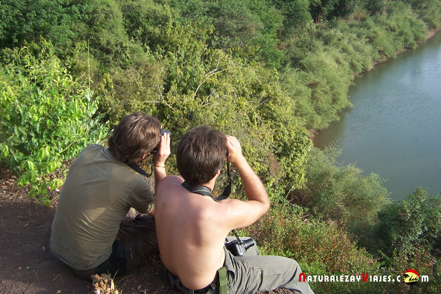 Birdwatching en Senegal