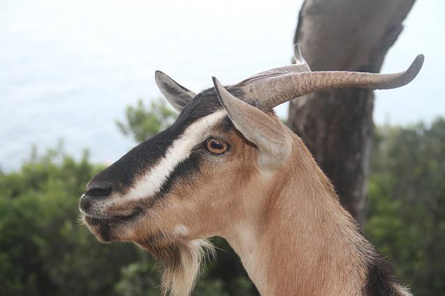 capre arbatax park resort