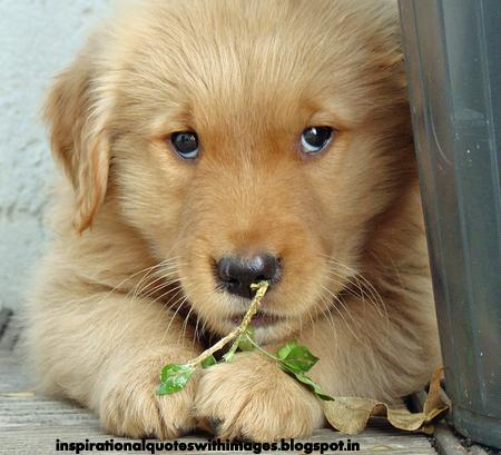 Inspirational Quotes With Images Puppy Golden Retriever Cute