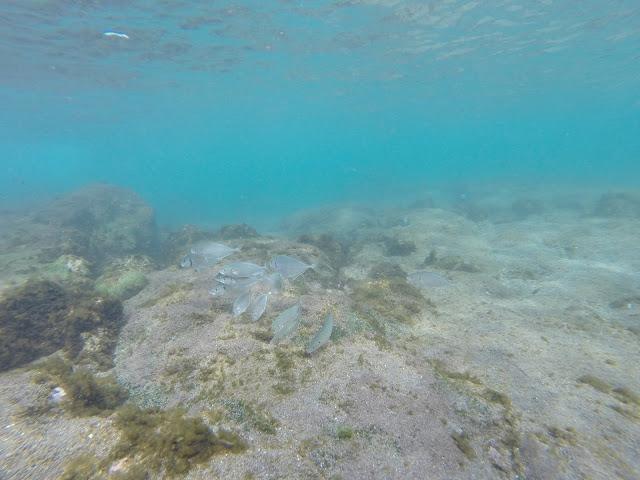 Peces de Isla de Pascua