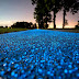 Poland Just Unveiled A Glow-In-The-Dark Bicycle Path That's Charged By The Sun