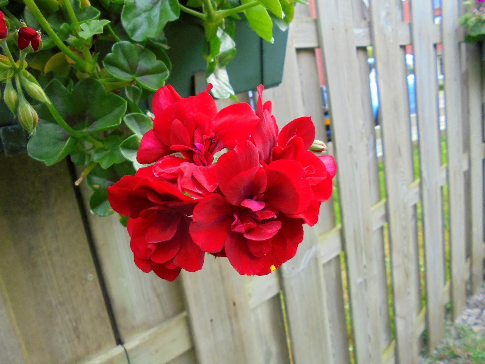 mooie bloemen namen