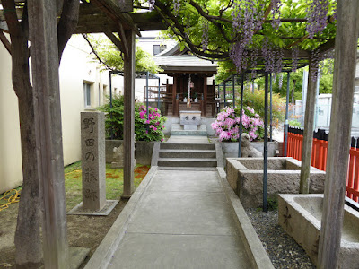 春日神社の藤(のだふじ発祥の地)