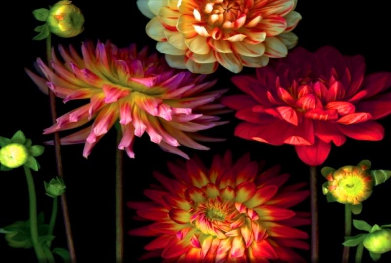 Cuadros modernos pinturas y dibujos cuadros de flores - Cuadros flores modernas ...