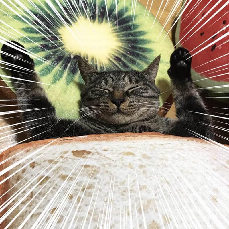 Unduh 95+  Gambar Lucu Kucing Jatuh Cinta Paling Lucu