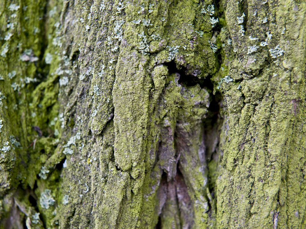 Wallpaper Tree Bark Wallpapers