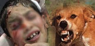العثور علي رأس طفل رضيع في «كومة قش» بالدقهلية.. ومصدر أمني: «نهشته الكلاب»