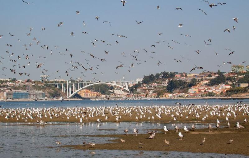 Estuário do rio Douro