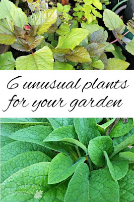 6 unusual plants for your garden and why you should be growing them too.