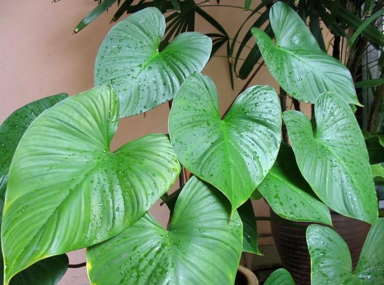 Manfaat dan Khasiat Tumbuhan Nampu