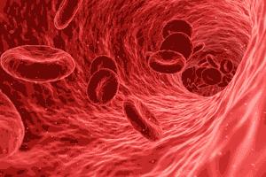 Interior de una arteria por donde circula la sangre con sus glóbulos rojos cargados de oxígeno