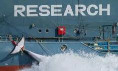 η σφαγή των φαλαινών γίνεται για λόγους επιστημονικής έρευνας