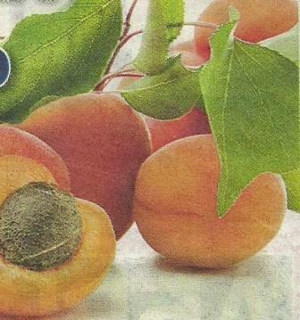 Полезные качества абрикосов