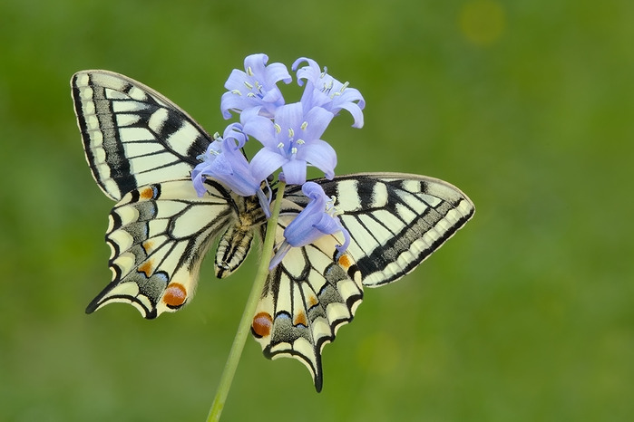 через объектив: Красивые фотографии бабочек   Фотографии и ...