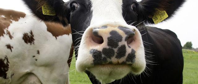 Se venderá solo carne de mataderos en Armenia