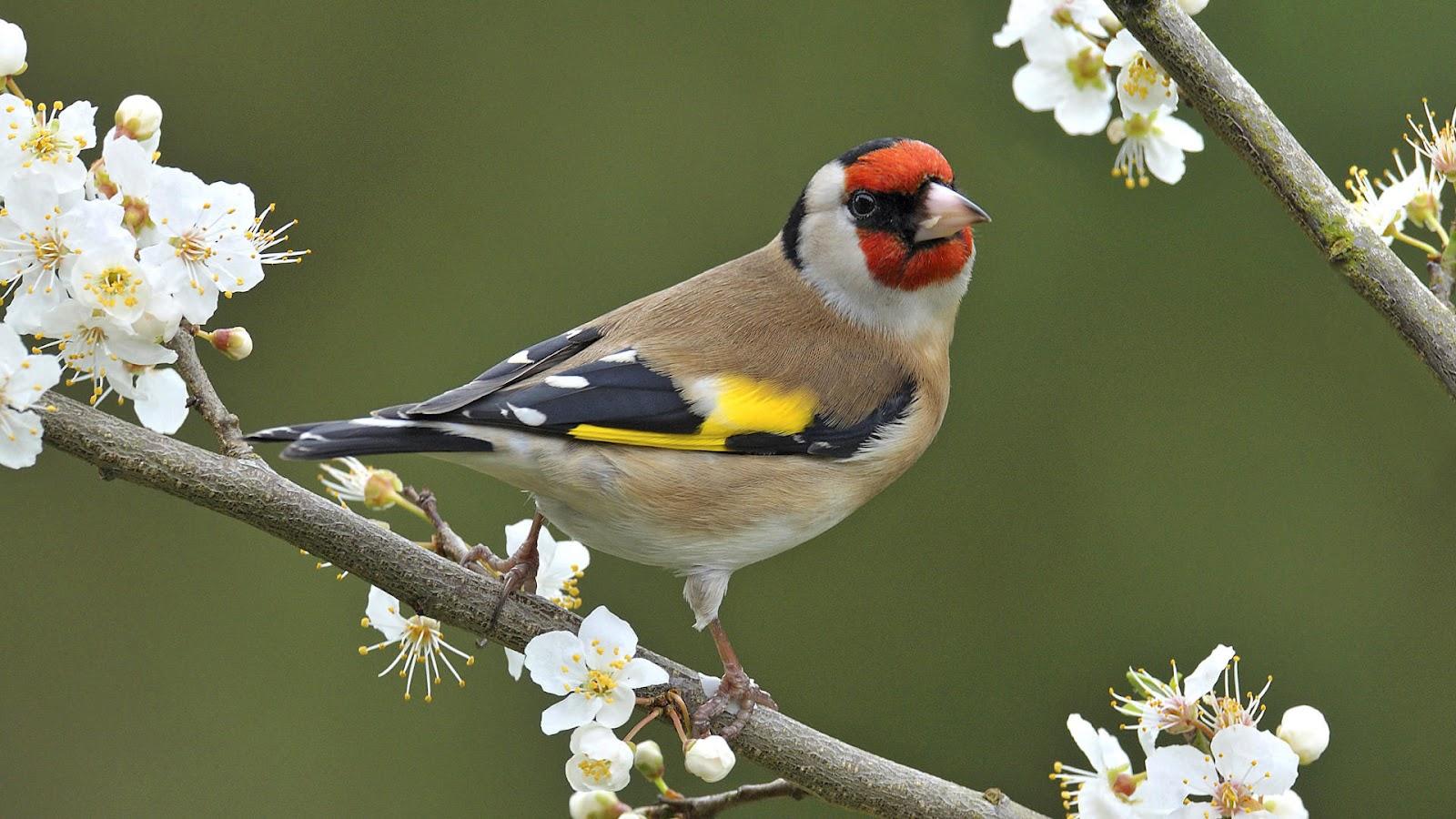 hd vogel wallpaper met -#main