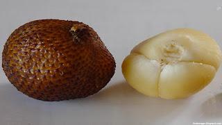 salak fruit images wallpaper