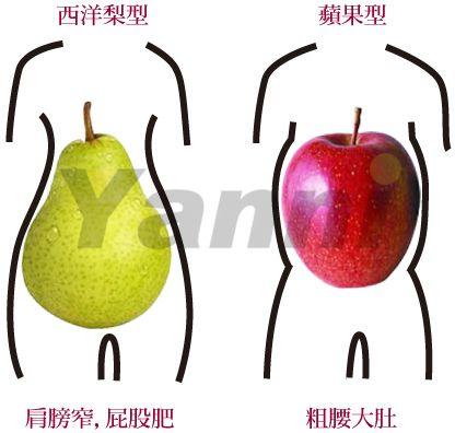 西洋梨/蘋果型肥胖要如何瘦下半身?