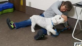 exercícios para cães em casa