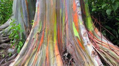El árbol de los colores