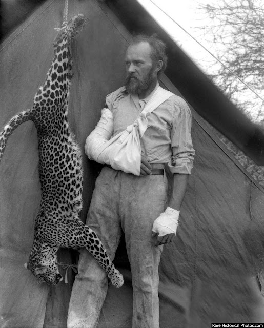 Carl Akeley with the leopard that nearly killed him, 1896.