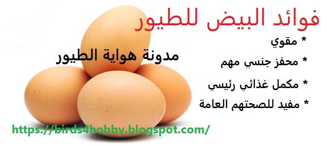 بيض الدجاج ل الطيور مكوناته و كيفية  تقديمه للطيور