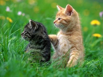 black-creame-cat-babies