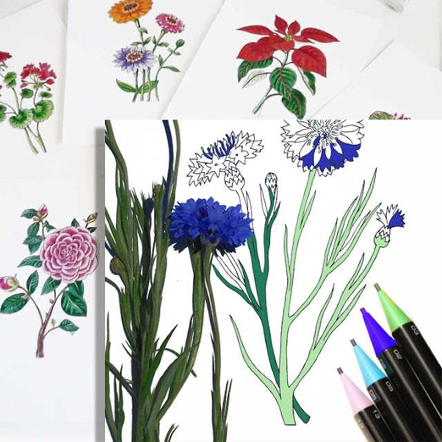drawings of botanical flowers colored