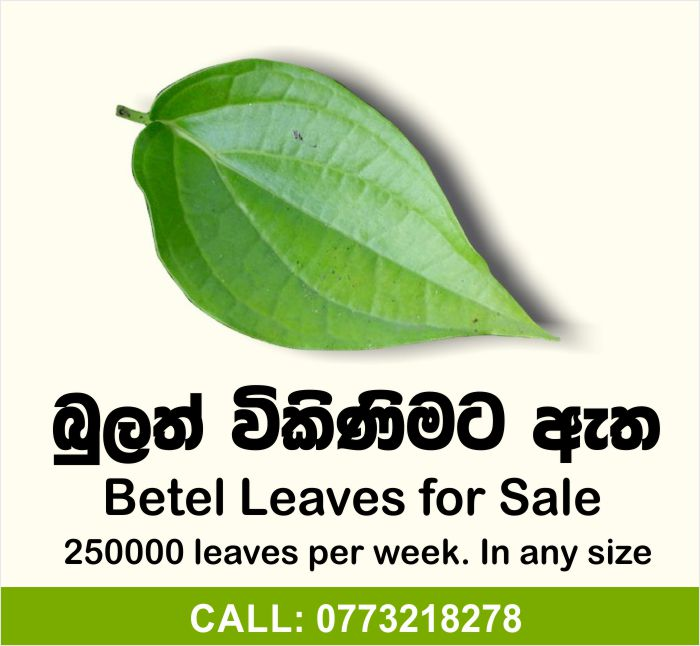 Betel Leaves for Sale.