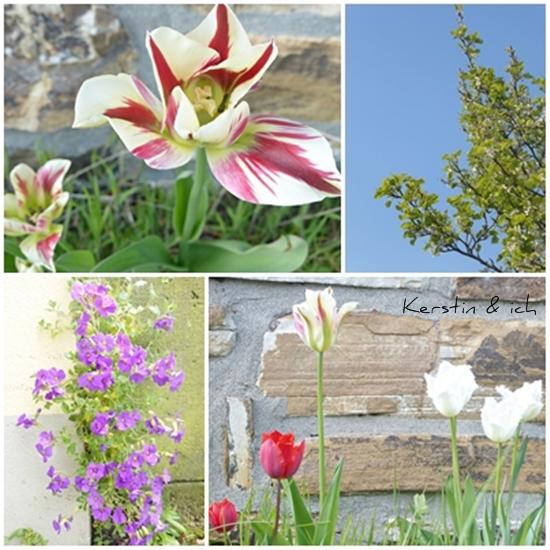Collage Frühling mit Blumen und Naturfotos