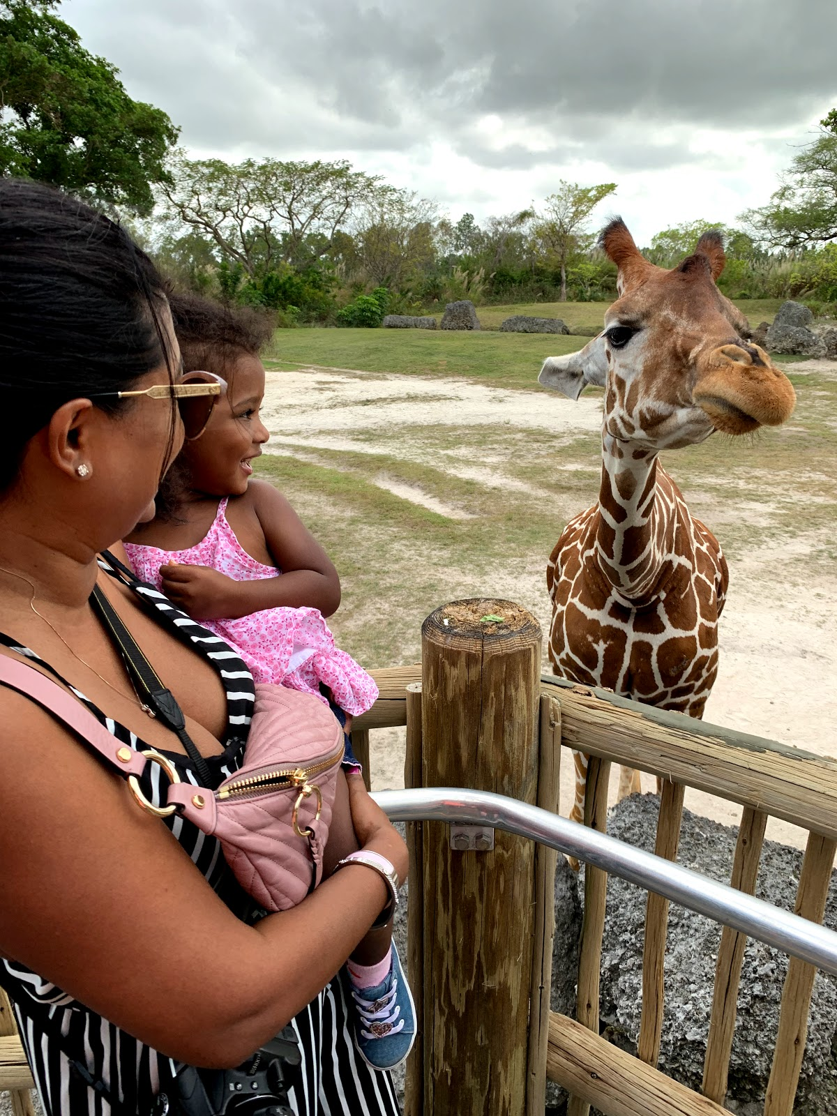 things to do with kids in miami, miami zoo, feeding the giraffes