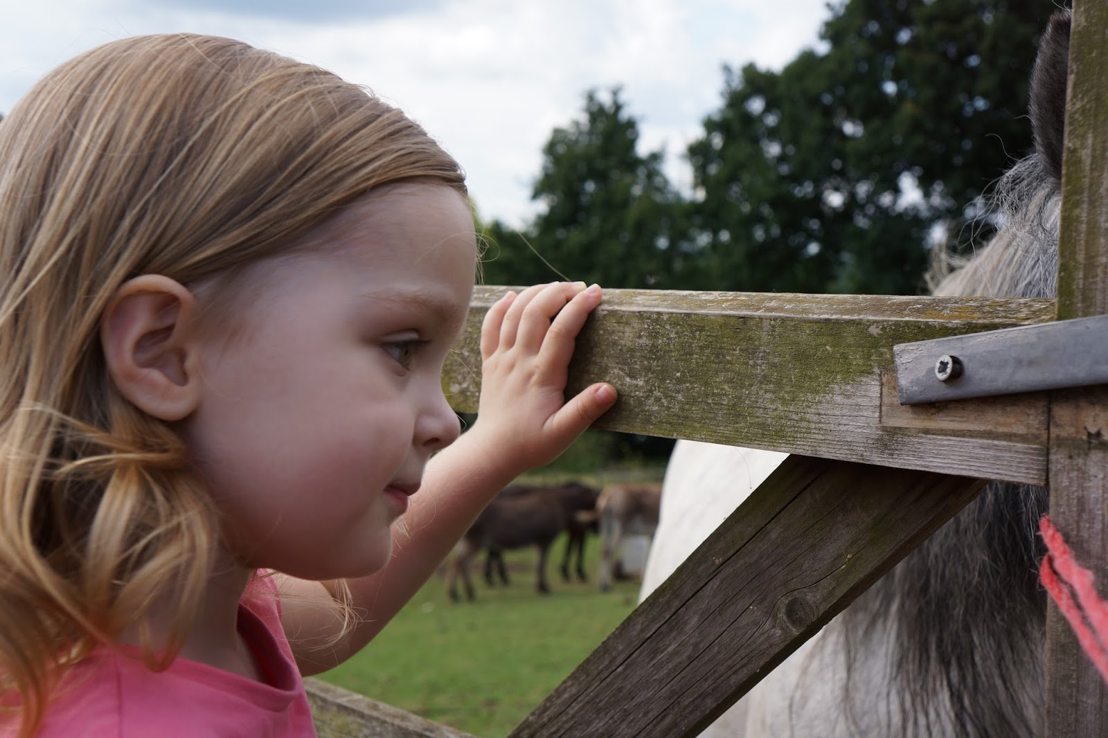 toddler looking at a horse in a pen