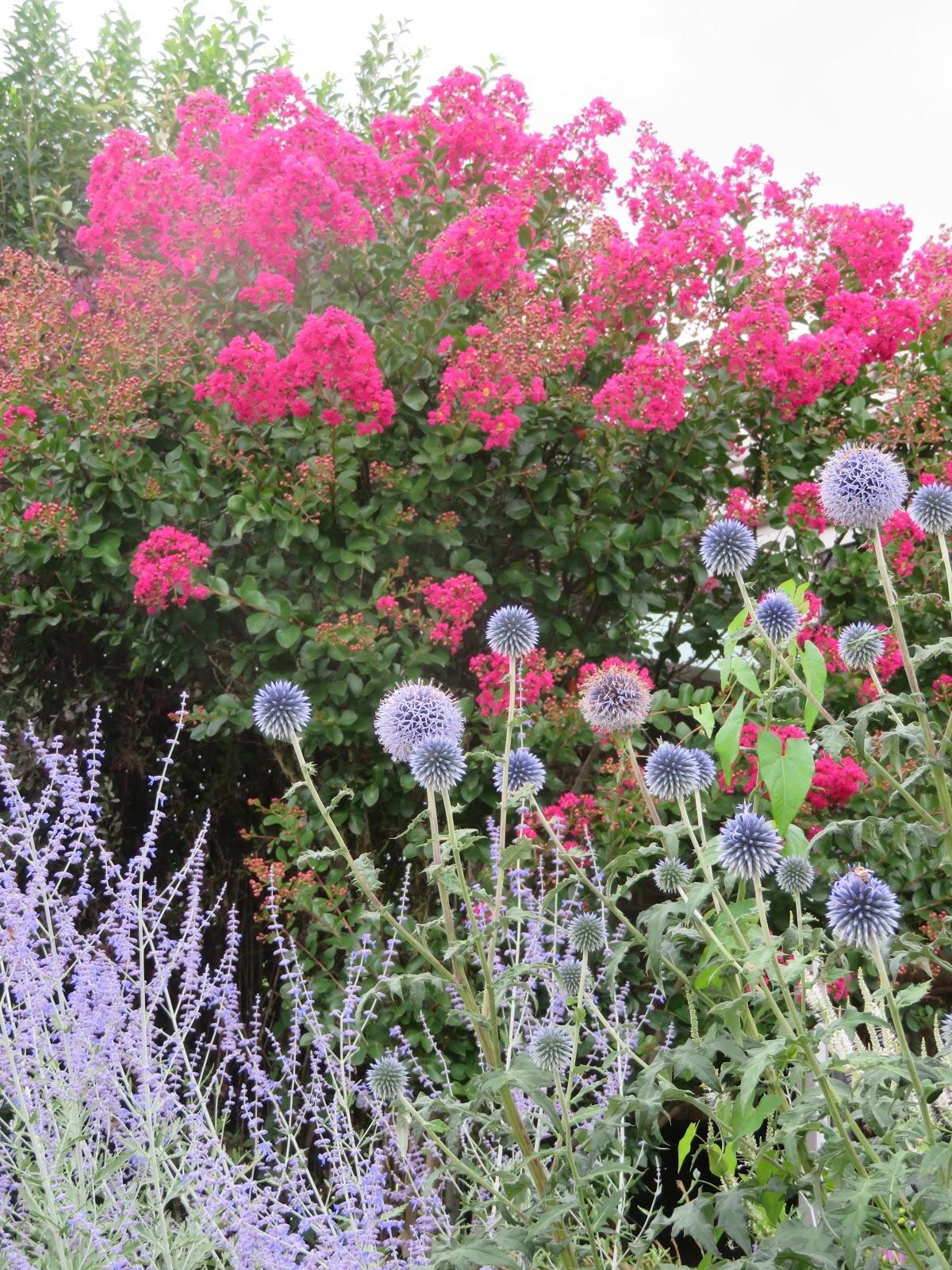 Mes motsdoubs quelques plantes du jardin en ce mois de for Plantes du jardin