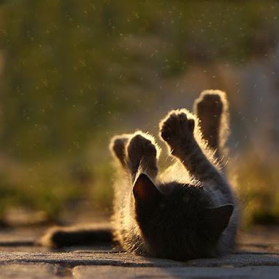Cute Cats Kitty Pets 04