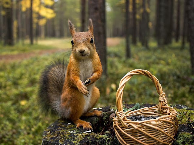 Squirrels Animal wallpapers