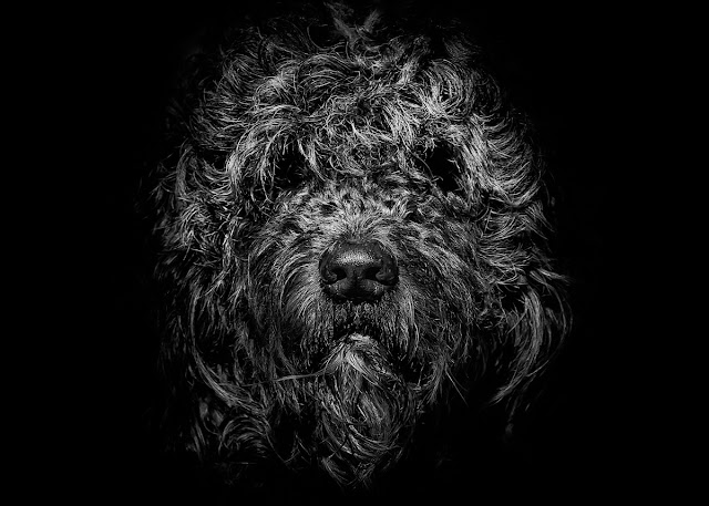 Ziggy Portrait No 1 by The Learning Curve Photography