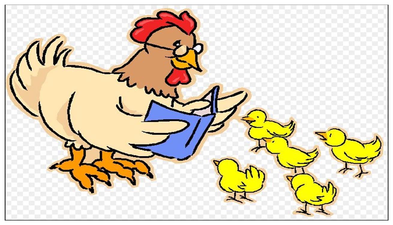 Lucu Ayam Tidur Ktawaayo Ketawa
