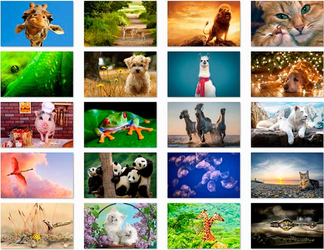 100 Animal HD Wallpapers Preview 01 by Saltaalavista Blog